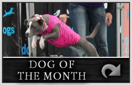 modules-dog-of-the-month1